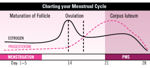 charting-menstrual-cycle