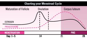 charting-menstrual-cycle