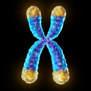 x-chromosome-telomere